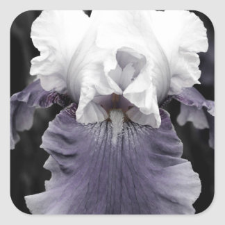 Beautiful faded purple iris print sticker