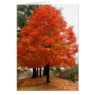 Beautiful Fall Notecard