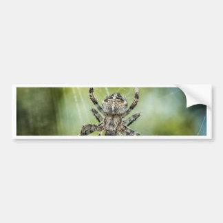 Beautiful Falling Spider on Web Bumper Sticker