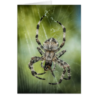Beautiful Falling Spider on Web Card
