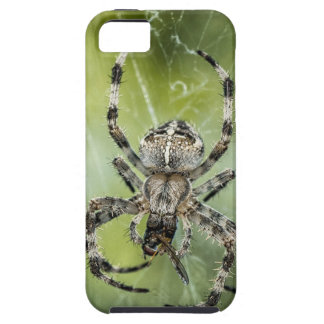 Beautiful Falling Spider on Web Case For The iPhone 5