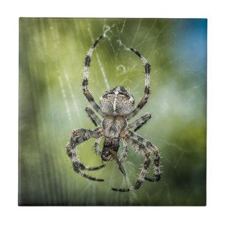 Beautiful Falling Spider on Web Ceramic Tile