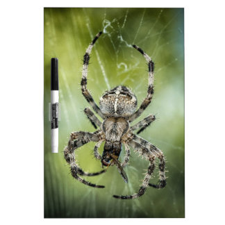 Beautiful Falling Spider on Web Dry Erase Board