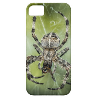 Beautiful Falling Spider on Web iPhone 5 Case