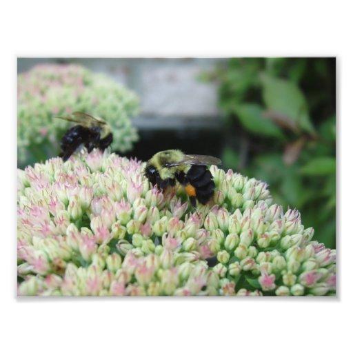 Beautiful Feeding Bee Photo Print