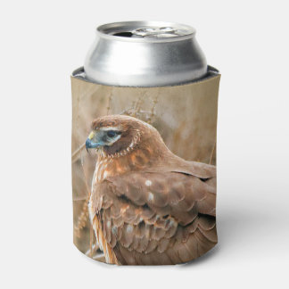 Beautiful Female Northern Harrier in the Marsh Can Cooler
