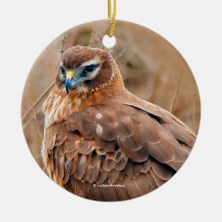 Beautiful Female Northern Harrier in the Marsh Round Ceramic Decoration