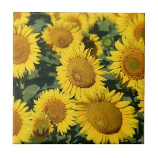 Beautiful Field of Sunflowers Ceramic Tile