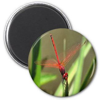 Beautiful Firecracker Dragonfly Magnet