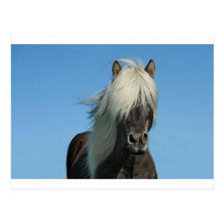 BEAUTIFUL FJORD PONY HORSE STALLION POSTCARD