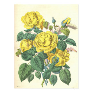 beautiful floral bouquet with spring flowers. postcard