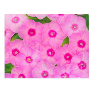 beautiful floral decoration postcard