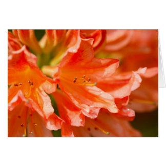 Beautiful Flower - Blank Greeting Card Card