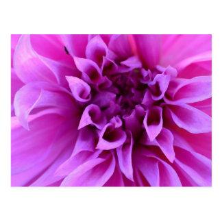 Beautiful Flowers Pretty Purple Flower Gifts Postcard