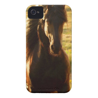 BEAUTIFUL FRIESIAN HORSE STALLION Case-Mate iPhone 4 CASES