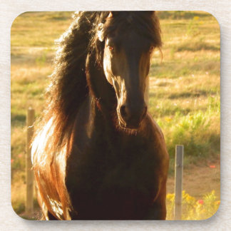 BEAUTIFUL FRIESIAN HORSE STALLION COASTER