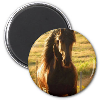 BEAUTIFUL FRIESIAN HORSE STALLION MAGNET