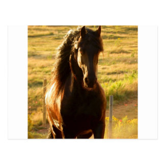 BEAUTIFUL FRIESIAN HORSE STALLION POSTCARD