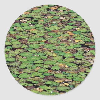 Beautiful Fringed water lily Stickers