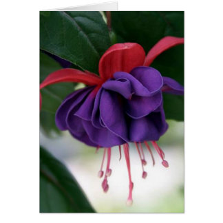 Beautiful Fuchsia Card