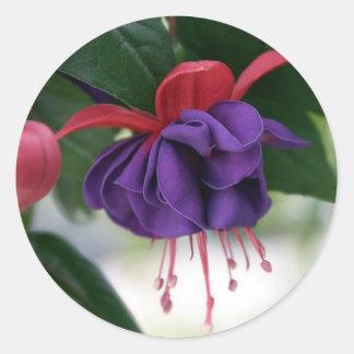 Beautiful Fuchsia Classic Round Sticker