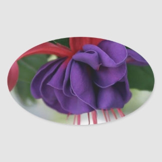 Beautiful Fuchsia Oval Sticker