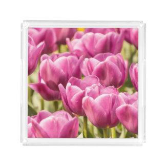 Beautiful Fuchsia Pink Tulips