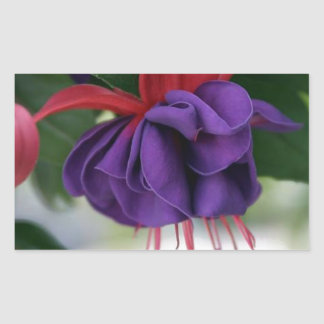 Beautiful Fuchsia Rectangular Sticker