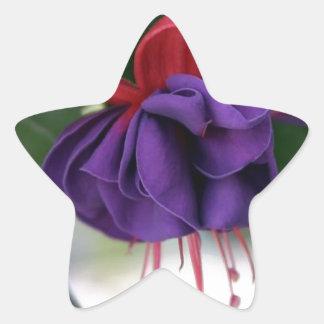 Beautiful Fuchsia Star Sticker