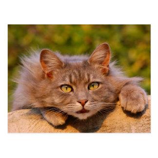 Beautiful furry cat outside portrait postcard