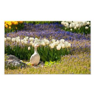 Beautiful Garden Photo Art
