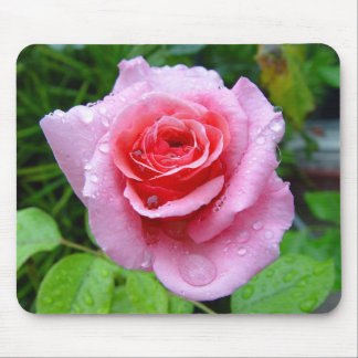 Beautiful Garden Single Wet Pink Rose Mousepad