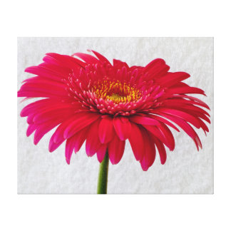 Beautiful Gerbera Daisy Wrapped Canvas Gallery Wrapped Canvas