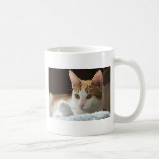beautiful ginger and white cat classic white coffee mug