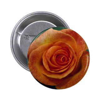 Beautiful Gold Medal Grandiflora Rose Aroyqueli Button