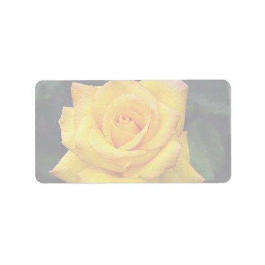 Beautiful Gold medal Grandiflora Rose, 'Aroyqueli' Label