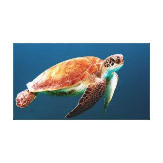 Beautiful Green Sea Turtle Canvas Print