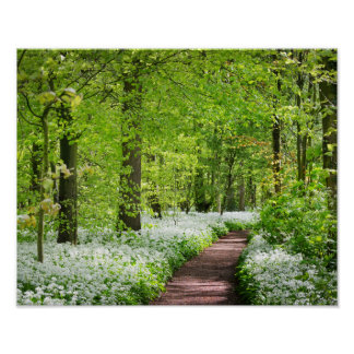 Beautiful Green Springtime Forest Photo Poster