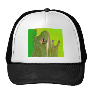 Beautiful green tree frog giviing the peace sign. hats