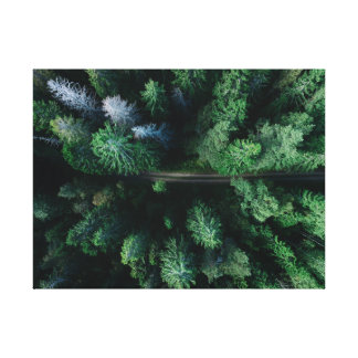 Beautiful green wooded forest to of trees canvas print