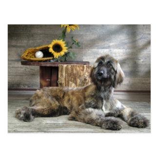 Beautiful Grey Afghan Hound Dog Postcard