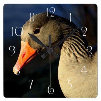 Beautiful greylag goose square wall clock