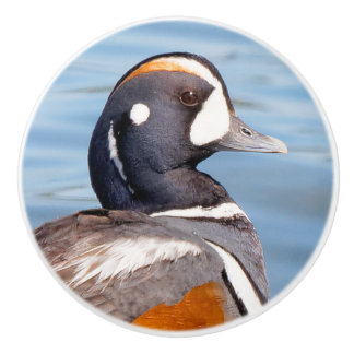 Beautiful Harlequin Duck on the Rock Ceramic Knob