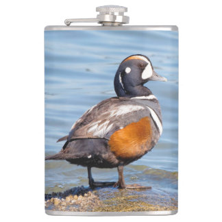 Beautiful Harlequin Duck on the Rock Hip Flask