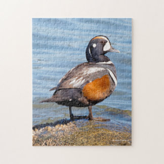 Beautiful Harlequin Duck on the Rock Jigsaw Puzzle