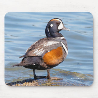 Beautiful Harlequin Duck on the Rock Mouse Pad