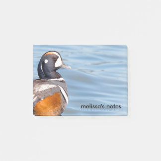 Beautiful Harlequin Duck on the Rock Post-it Notes