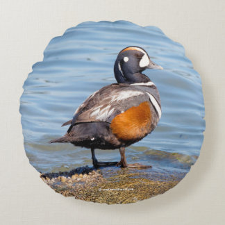 Beautiful Harlequin Duck on the Rock Round Cushion
