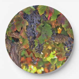 Beautiful Harvest Wine Vineyard Picnic Paper Plate