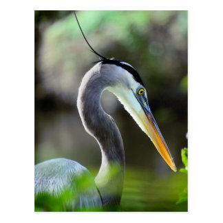 Beautiful Heron Postcard